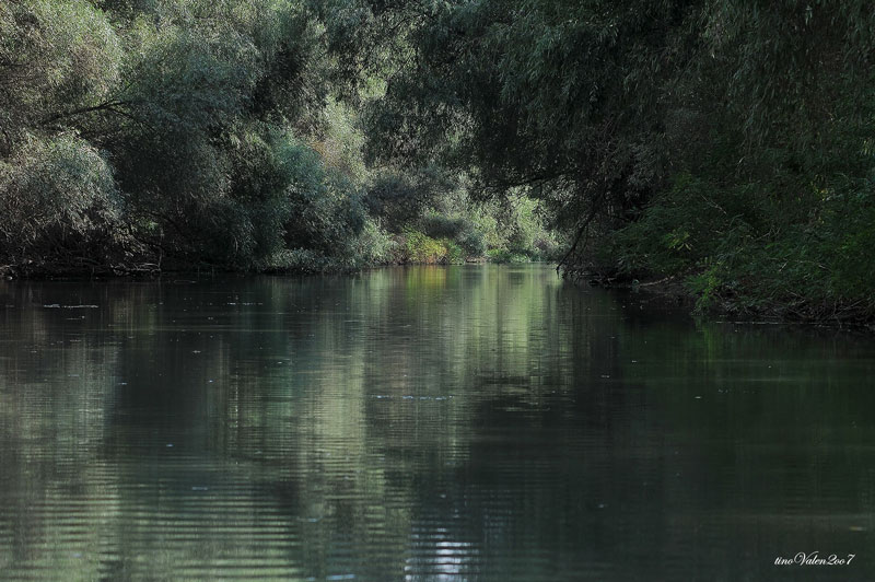 ... danube delta, water reflections ...