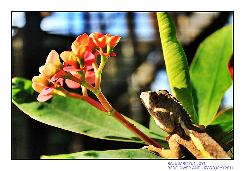 red flower and a lizard