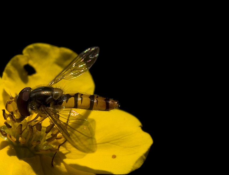 hoverfly in space