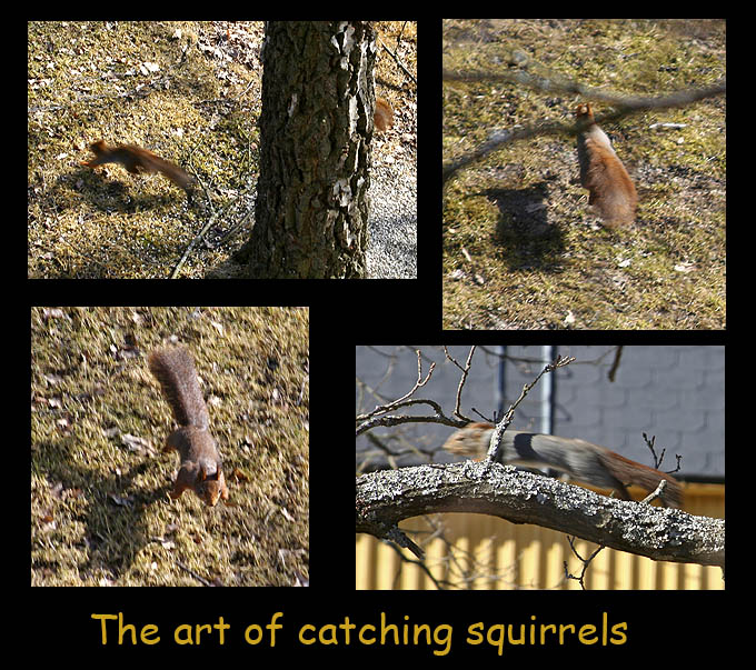 missed squirrels