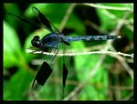 Title: dragon wings