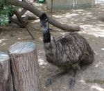 Title: I am very heavy (EMU)