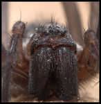 Title: Spider close-up