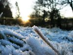 Title: A sudden frost
