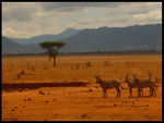 Title: Zebras at the water hole