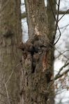 Title: Young Squirrels