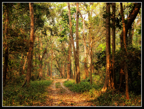 Buxa Reserve Forest (West)