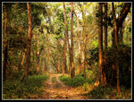 Title: Buxa Reserve Forest (West)
