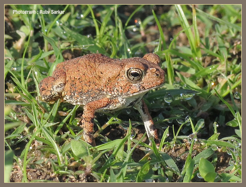 a baby toad for George