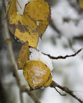 Title: Fall into Winter