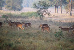 Title: Kanha National Park