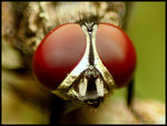 Title: COMPOUND EYES WITH 28 MM REVERSEDCannon EOS 550D
