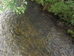Title: River full of salmons
