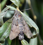 Title: Moth of the month