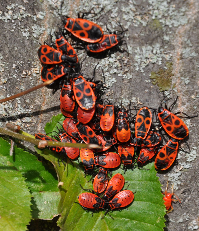 Bugs at the Sch�nbrunn
