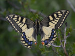 Title: Tatty splendour
