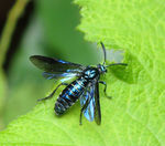 Title: Fly on a leaf