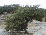 Title: Small tree
