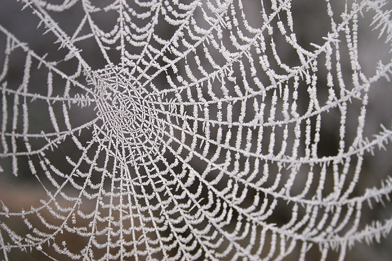 laced web
