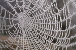 Title: laced webCanon 20D