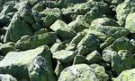 Title: Lichens on the rocks