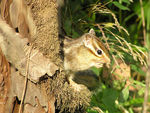 Title: Squirrel at home