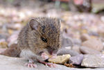 Title: Hungry Mouse