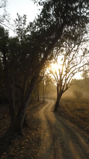 Along dusty road with dusk closing in...
