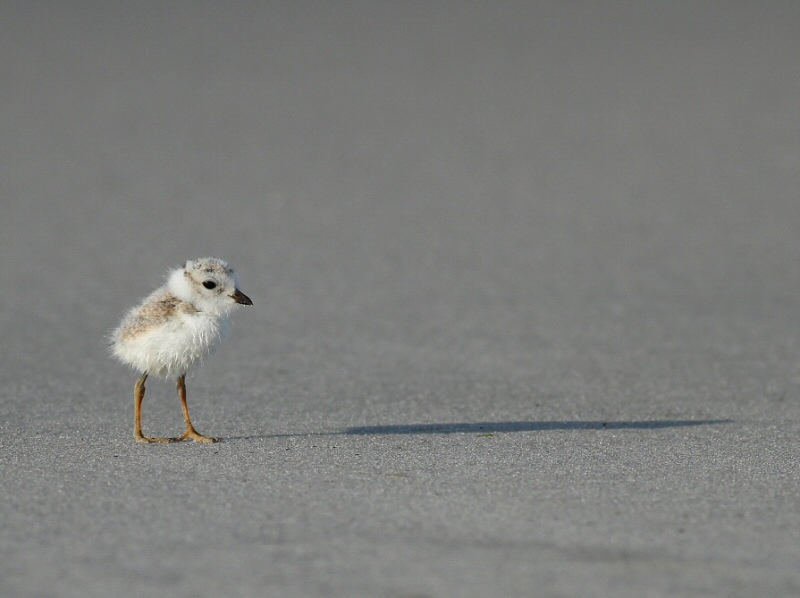 Tiny and Alone