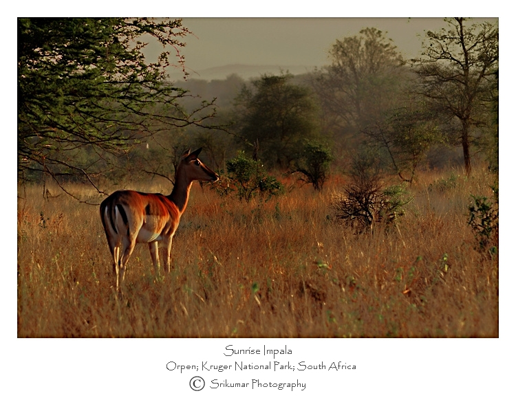 Sunrise And African Savannah