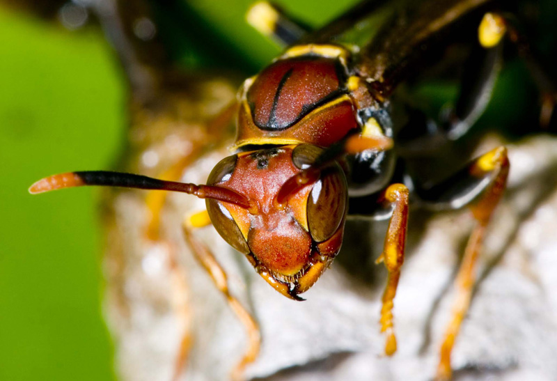 Wasp in colors