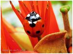 Title: A LADYBIRD IN DISGUISE