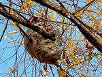 Title: Wasp's nest