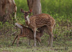 Title: CHITAL