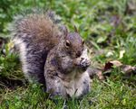 Title: Squirrel 03