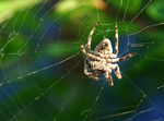 Title: a spider