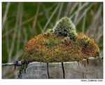 Title: Pole with a mossy Hat