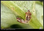 Title: Bugs, mating
