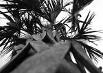 Title: Palm Friday