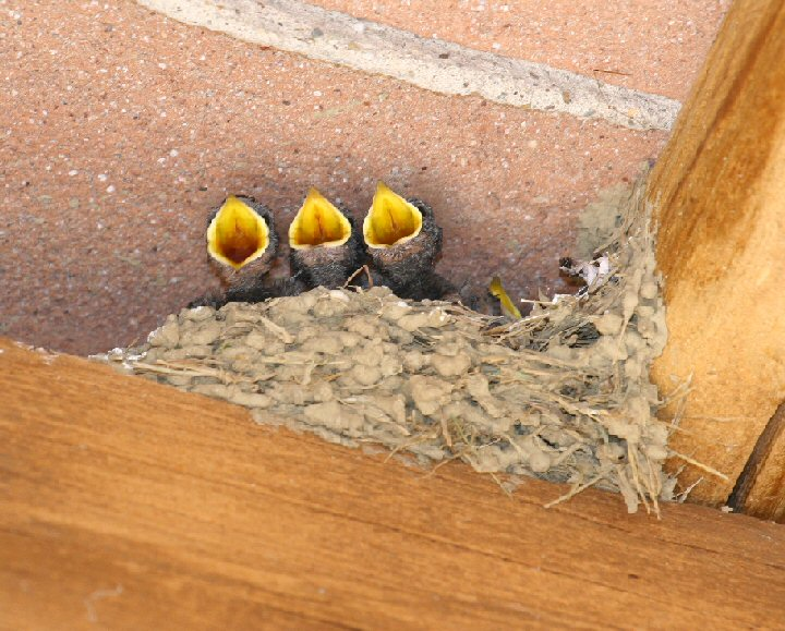 Swallow together