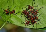 Title: Red bugs