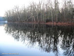 Title: Lake & Forest