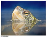 Title: Map Turtle (but where�s the map?)