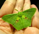 Title: Green MOTH in My HandMinolta Dimage Z2