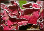 Title: Kissed from the frost