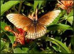 Title: Hello - pretty Asien Butterfly ...