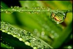 Title: ...like the first dewfall ...Canon EOS 350D