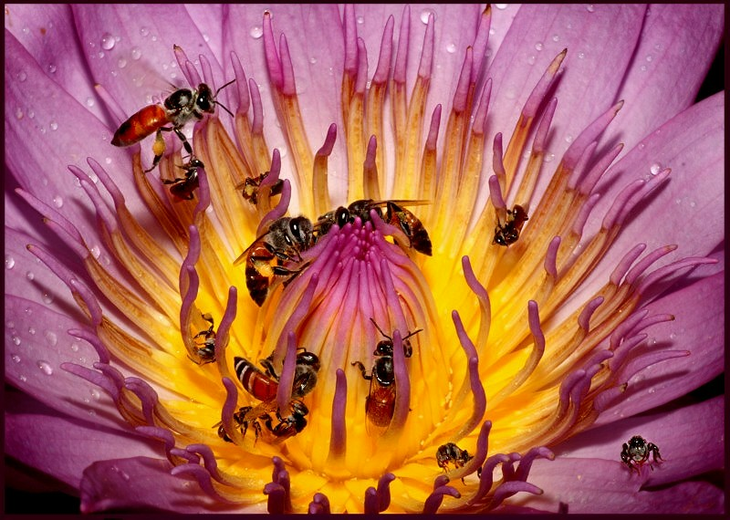 How many are inside the lily ?