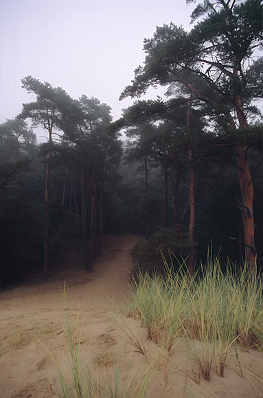 Happy new year from the Veluwe