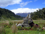 Title: Nature in New Zealand